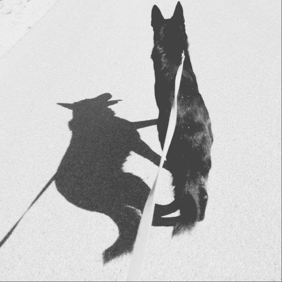 Shadow Dog Art Print