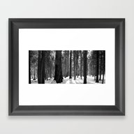 The Sequoias Framed Art Print