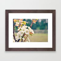 Pear Blossoms Framed Art Print