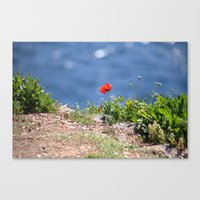 Spring Papaver 889 Canvas Print