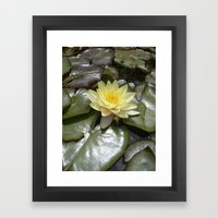 Yellow Water Lily VII Framed Art Print
