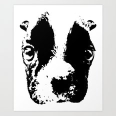Curious French Bulldog Art Print