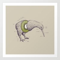 bird Art Prints featuring Kiwi Anatomy by William McDonald