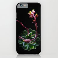 iPhone & iPod Case featuring Succulent  by Nimai VandenBos