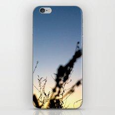 Sunset Contrast iPhone & iPod Skin