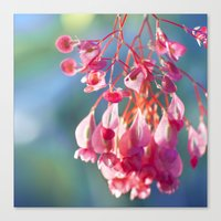 Angel Wing Begonia Canvas Print