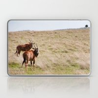 Wide Open Spaces Laptop & iPad Skin