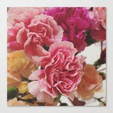 Soft Pink Carnations Canvas Print