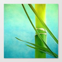 WELLNESS BAMBOO Canvas Print