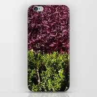 Colorful Leaves iPhone & iPod Skin