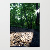 Sunshine through the Woods Canvas Print