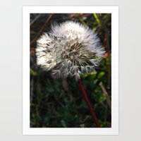 Decorated Dandelion Art Print