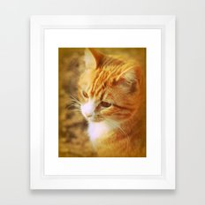 Creamsicle Cat Framed Art Print