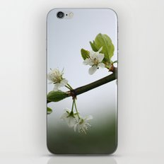 Victoria Plum Blossom iPhone & iPod Skin