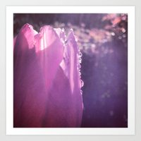 Tulip With Water Droplet… Art Print