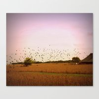 Birds Flying At Sunset Canvas Print