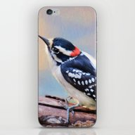Downy Woodpecker iPhone & iPod Skin