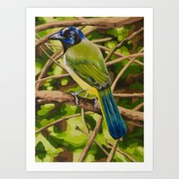 Green Jay Art Print