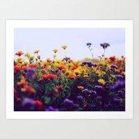 Flower Field II Art Print
