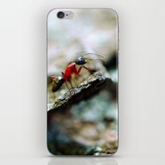 Ant Insect Photography, Nature, Macro, Home Decor iPhone & iPod Skin