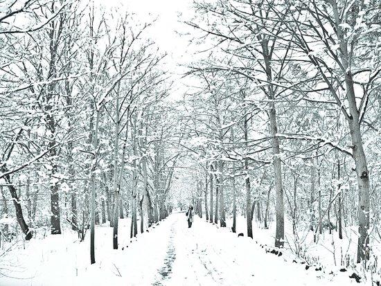 winter symphony Art Print