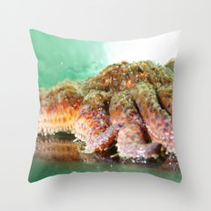 Sunflower Sea Star Throw Pillow