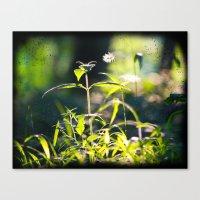 Evening Plant Glow Canvas Print