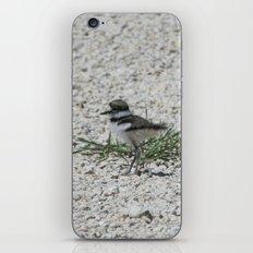 Baby Killdeer iPhone & iPod Skin