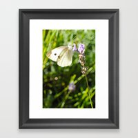 Opaque Butterfly Framed Art Print