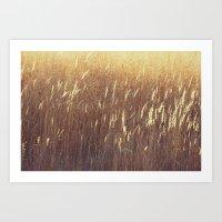 Amber waves No. 1 Art Print