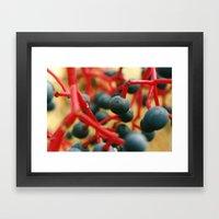 Wild Berries of the Don Framed Art Print