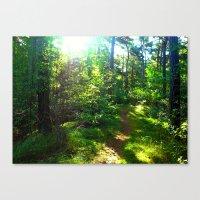 Sunshine Forest Canvas Print