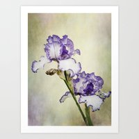 Iris Ripple Art Print