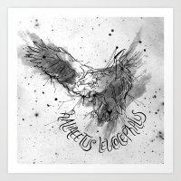 FIG. 756 (Haliaeetus Leu… Art Print