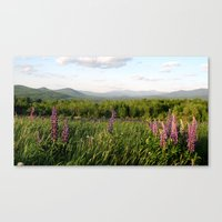 Lupinescape Canvas Print