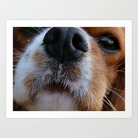 Nosey Dog Art Print