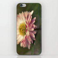 Sidelong Glance iPhone & iPod Skin