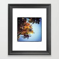 The Red Berry Tree (An Instagram Series) Framed Art Print