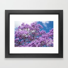 Jacaranda Tree Framed Art Print