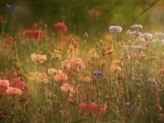 In a Meadow, Painterly Canvas Print