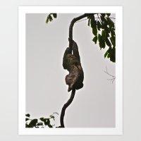 3-toed Sloth Art Print