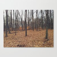 Indiana Forest Canvas Print