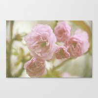 So Pretty In Pink  Canvas Print