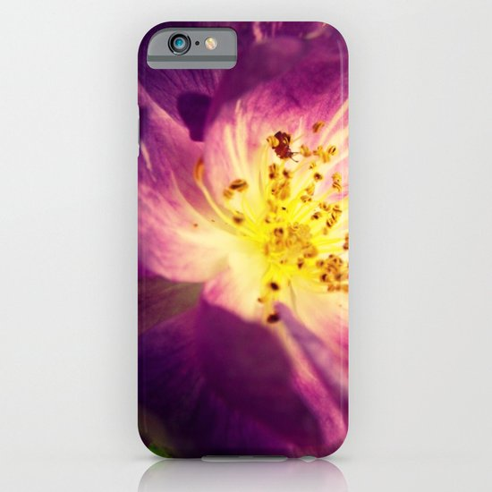 Little Bit Country iPhone & iPod Case
