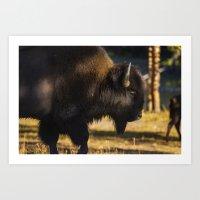 Yellowstone National Park - Bison Art Print