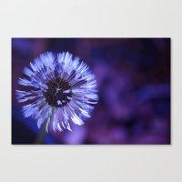 Violet Dandelion Canvas Print