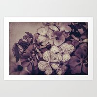 Geraniums -- Monochrome … Art Print