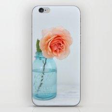Rose in a Jar iPhone & iPod Skin