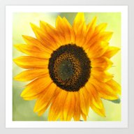 BRIGHT SUNFLOWER  Art Print