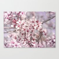 Icy Pink Blossoms - In M… Canvas Print